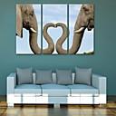 cheap Prints-Print Rolled Canvas Prints - Animals Classic