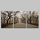 halpa Lemmikin joulupuvut-Canvastaulu Art Maisema Central Park Set of 3