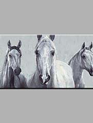 Pintados à mão Animal Horizontal,Estilo Moderno Modern 1 Pça. Tela Pintura a Óleo For Decoração para casa