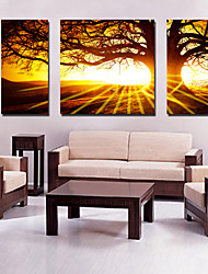 cheap -Canvas Set of 3 Landscape Big Tree in Sunset Stretched Canvas Print Ready to Hang