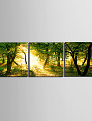 cheap -Stretched Canvas Art Landscape Yellow Light though the Forest Set of 3