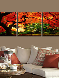 cheap -Stretched Canvas Art Landscape Go Deep Into a Forest of 3