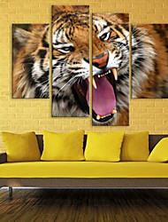 cheap -Stretched Canvas The Tiger Decoration Set of 4
