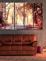 abordables -e-FOYER toile tendue art la chute de la mangrove décoratif ensemble de cinq de peinture