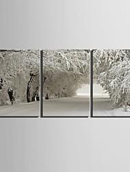 preiswerte -E-Home® Leinwand Kunstschneelandschaft Dekoration Malerei Set von 3