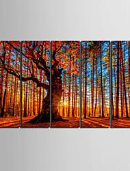 abordables -e-HOME lona envuelta arte de madera roja conjunto pintura decorativa de 5
