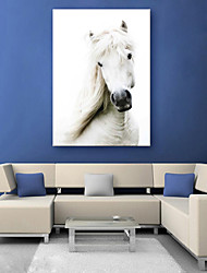 cheap -E-HOME® Stretched Canvas Art The White Horse Decoration Painting  One Pcs
