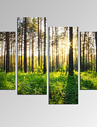 cheap -VISUAL STAR®Sunlight in Forest Landscape Picture Print on Canvas for Home Decoration Ready to Hang