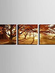 cheap -E-HOME® Stretched Canvas Art Light Forest Decoration Painting  Set of 3