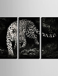 E-HOME® Stretched Canvas Art Leopard Decoration Painting Set of 3