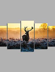 cheap -Rolled Canvas Prints Animals Modern, Five Panels Canvas Horizontal Print Wall Decor Home Decoration