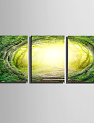 E-HOME Stretched Canvas Art Mysterious Woods Decoration Painting Set Of 3