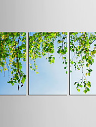cheap -Landscape Floral/Botanical Classic Pastoral, Three Panels Canvas Vertical Print Wall Decor Home Decoration