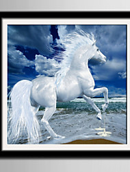 cheap -E-HOME® Framed Canvas Art White Horse Running On The Beach Framed Canvas Print One Pcs