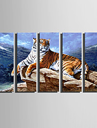 cheap -E-HOME Stretched Canvas Art A Tiger Resting On Stone Decoration Painting Set Of 5