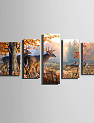 E-HOME Stretched Canvas Art The Deer In The Forest In Autumn Decoration Painting Set Of 5