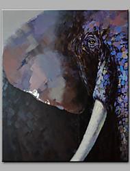 Недорогие -Hang-роспись маслом Ручная роспись - Животные Modern Без внутренней части рамки / Рулонный холст