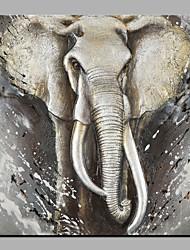 Недорогие -Hang-роспись маслом Ручная роспись - Абстракция Животные Modern холст