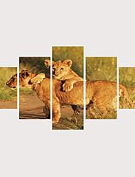 رخيصةأون -الطباعة يطبع قماش يلف مطبوعات قماش رغم الضغوط - حيوانات القطط معاصر الحديث خمس لوحات