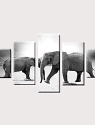preiswerte -Druck Gerollte Leinwand Aufgespannte Leinwandrucke - Tiere Modern Klassisch Modern Fünf Panele