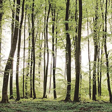 Bäume/Blätter Haus Dekoration Moderne Wandverkleidung, Segeltuch Stoff Klebstoff erforderlich Wandgemälde, Zimmerwandbespannung