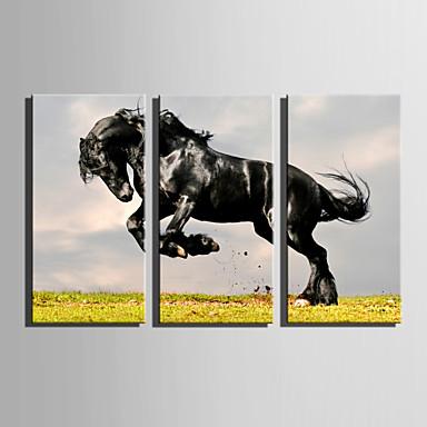 Canvas Set Eläin Moderni,3 paneeli Kanvas Pystysuora Tulosta Art Wall Decor For Kodinsisustus