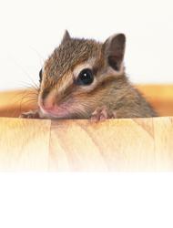 Tilbehør til smådyr