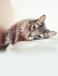 Katteklær og tilbehør